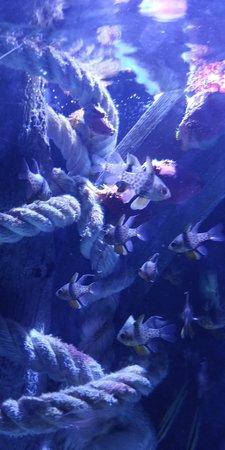 Valencia, İspanya: pesci 2
