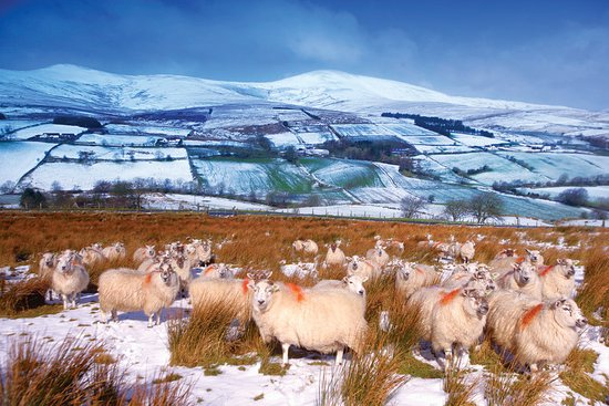 """""""So glad we all got our Christmas coats before the snow came!"""" ❄️🐑  #CountdownToChristmas  📌 The Sperrins, County Tyrone"""