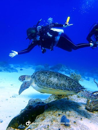 Nager avec une tortue!