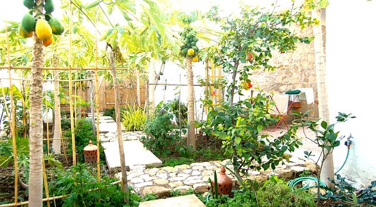 Aourir, Fas: ecological managed food garden with bananas, papaya, passion fruit, lots of aromatic herbs, no chemicals guarantee