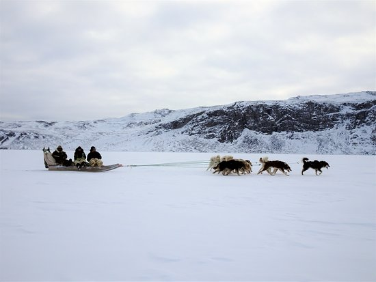 Qasigiannguit, Гренландия: Dogsledding is a big part of our life and business.  We arrange dogsled tours from a few hours to several days.