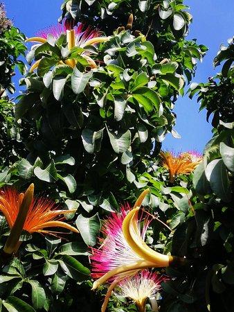 Kaleidoscopic garden. My ultimate refuge.