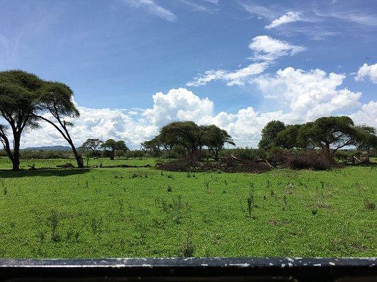 Best Photos for your Safari