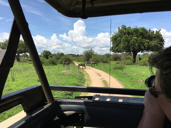 Zebras ahead