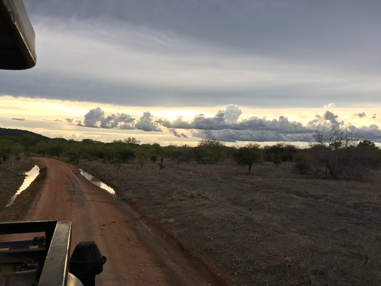 Evening game drive