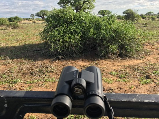 Best binocaulers for Safari