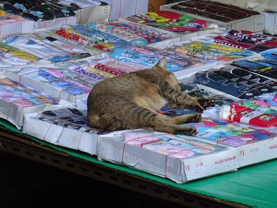 Cat keeping a keen eye on merchandise
