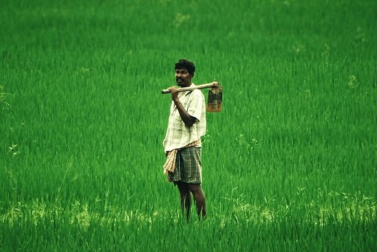 Experience native indian agriculture.