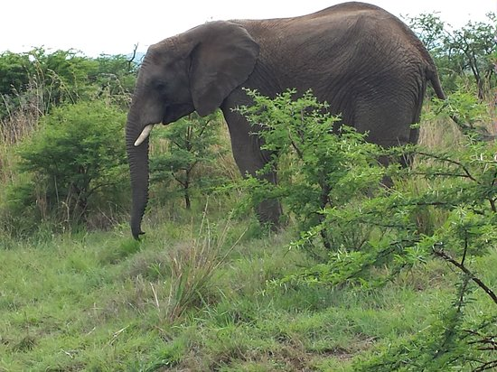 A few scary moments when a herd of elephants charged but our guide,Waldo, knew exactly what to do.