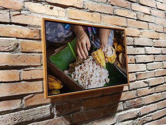 Cacao fermentation process.