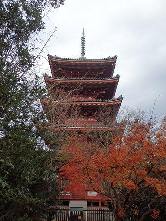 紅葉に映える素晴らしい五重塔