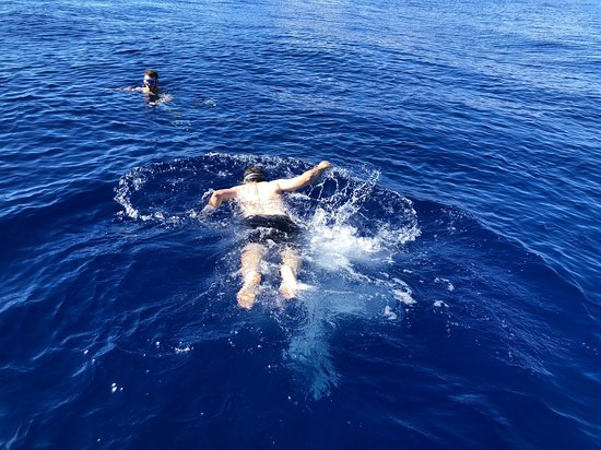 Half-Day Tour with Snorkeling Experience in Lahaina: Swimming in the open sea!