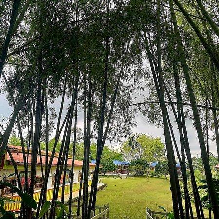 Filandia, Колумбия: BAMBOO HOTEL BOUTIQUE reconoce y resalta el valor y belleza de la naturaleza
