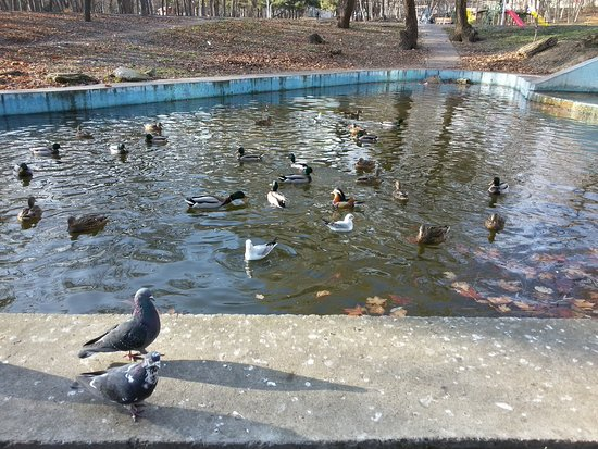 Мандаринка, утки, голуби, чайки