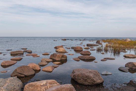 Алтья, Эстония: Gulf of Finland