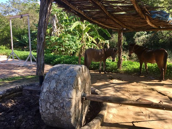 The Turtle Sanctuary Experience from Mazatlan: History of Agave Distilling