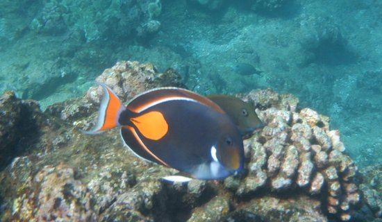 Gambar Half-Day Tour with Snorkeling Experience in Lahaina