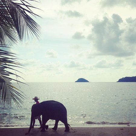 Elephant Island (Koh Chang) is named after its shape ;-)