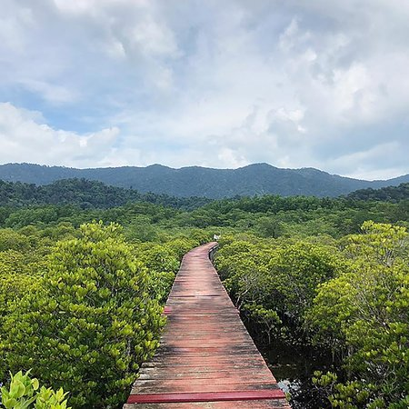 The ever popular Mangrove Walkway (Red Bridge), great for you Instagram fanatics!  Best at sunrise or sunset.  Close to Sleepover! Hostel and Gaya Café.
