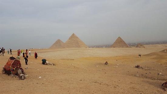 Camels at the pyramids