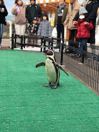Pinguim :)