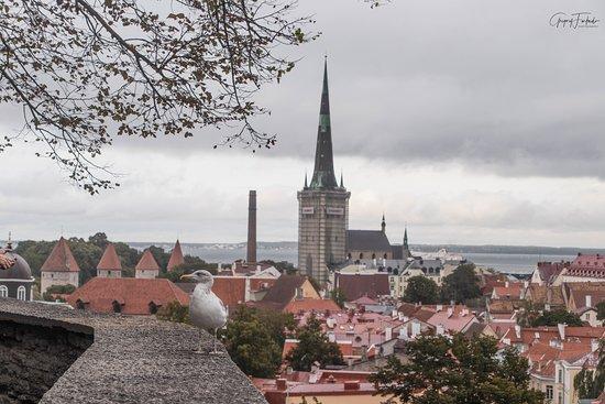 Tallin, Estonia: View from Kohtuotsa Platform