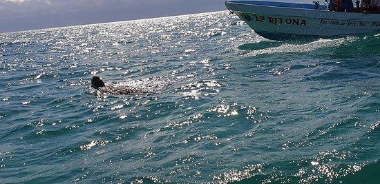 wir hatten Glück eine sehr gemütliche Meeresschildkröte zu finden