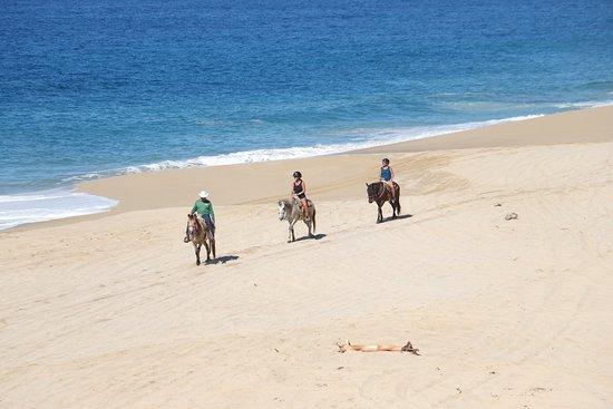 Cabo San Lucas Horseback Beach Ride: Intermediate and Advanced Levels: Alfredo leading us along the beach.