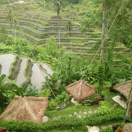 Ubud, Indonesia: Tegallalang rice terrace