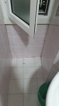 Una gran decepción: Penoso.  Esta es la realidad del Hotel Philia de Roma. Ningún parecido con las fotos publicadas. Desinsecticida urgente!