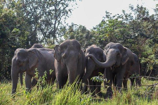 Kulen Elephant Forest
