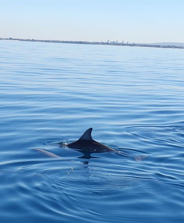 Adelaide Ocean Safari - 75-Minute Wild Dolphin Safari: Calm water and dolphins