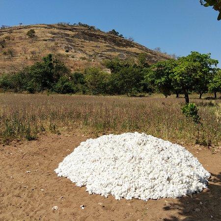 Korhogo, Costa de Marfil: Tas de neige au pied de la Colline de lataha? Ou fin de recolte ?