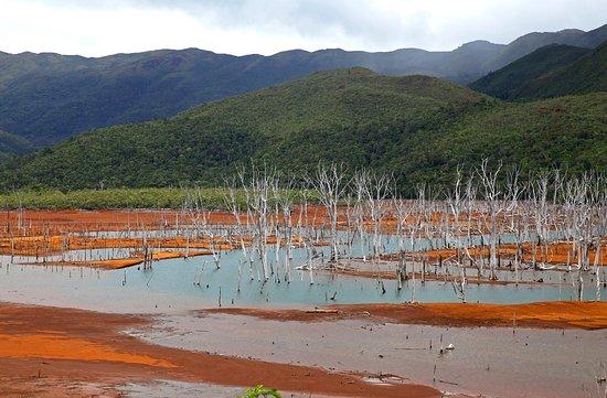 Parc Provincial de la Rivière Bleue , arbres morts dans une partie du lac , trees died in a part of the lake
