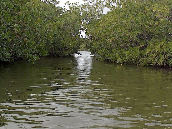 Clearbottom Mangrove Kayak & Snorkel tour Fotografie