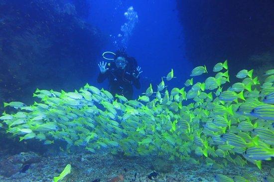 Dhigurah Island Resmi