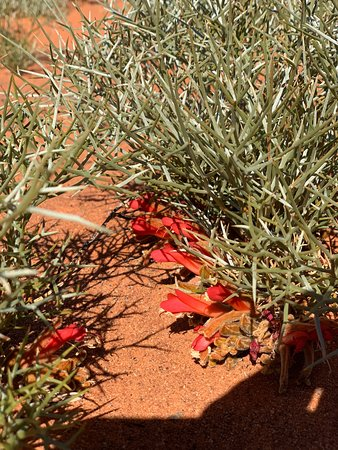 Wiluna, أستراليا: Durbra Spings, heaven on earth.
