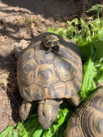 Die Himmelreich Schildkröten