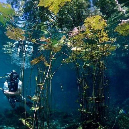 Остров Бунакен, Индонезия: Pemandangan wisata bawa laut bunaken Let's join wiht us Hp/wa 085145782009