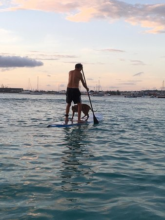 Surf board stock & chilling in Barbados , SUP with Banzi .