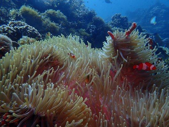Panglao Island, Philippines: клоуны