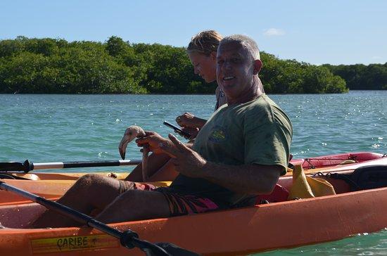 Clearbottom Mangrove Kayak & Snorkel tour: gelukt om de flamingo in de kayak te krijgen