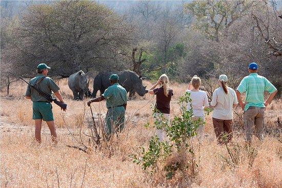 Promenade en rhinocéros dans le parc...