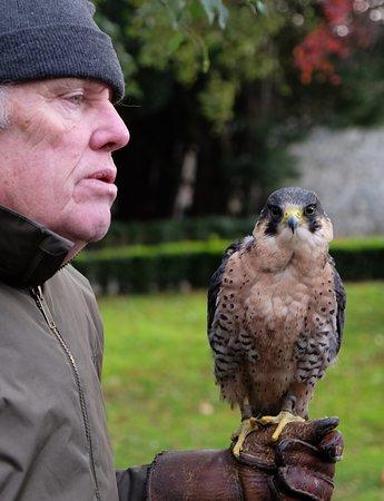 Falconry Workshop - falcon