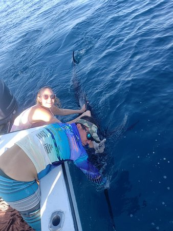 catch and release 130kg/280lbs Marlin