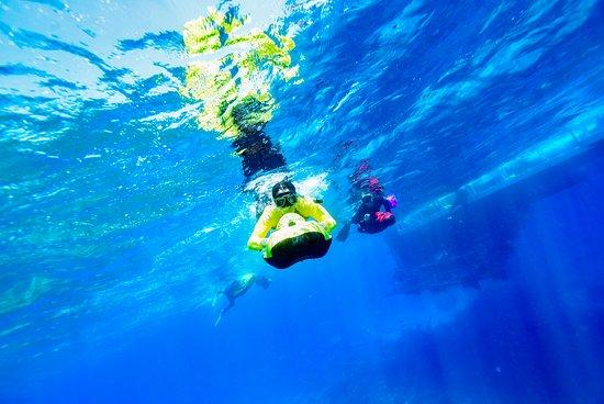 Great Barrier Reef Day Cruise fra Cairns, herunder Snorkeling og Marine Biologist Præsentation: Seabob