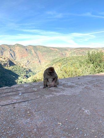 Ouzoud Falls Day Trip from Marrakech – fotografia