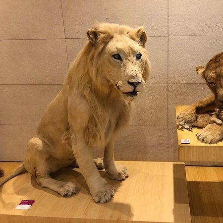 Museu com muitos animais embalsamados, tecnologia e ciência antiga e moderna!