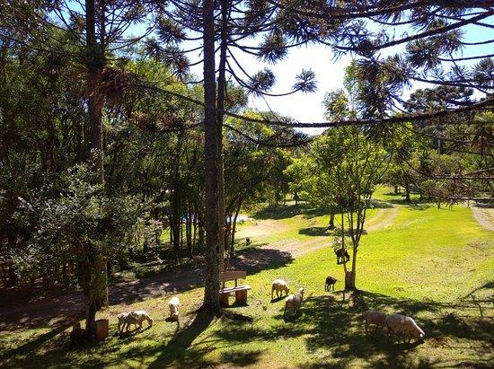 Arvorezinha Rio Grande do Sul fonte: media-cdn.tripadvisor.com