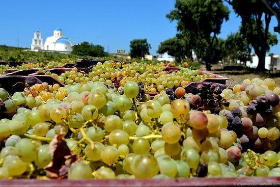 Excursion viticole semi-privée à...